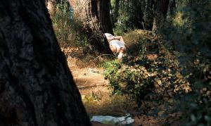 Heybeliada Pine Wood